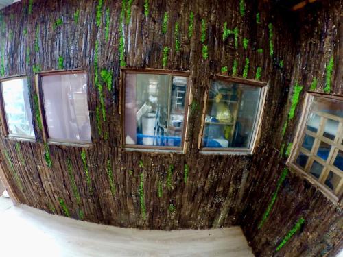 Mur Naturel en écorces d'arbres et Mousse verte